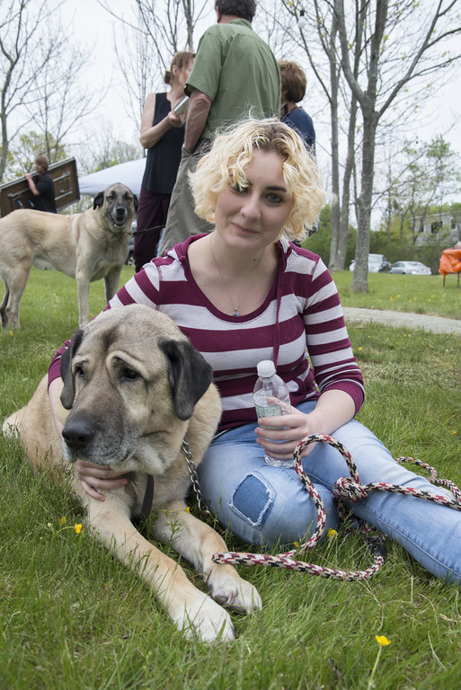 MAY 21: Kangal Club of America Dog Show, Windhover Center for the Performing Arts, Rockport, MA. (Photos by Tsar Fedorsky)