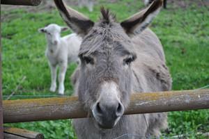 donkey guardian