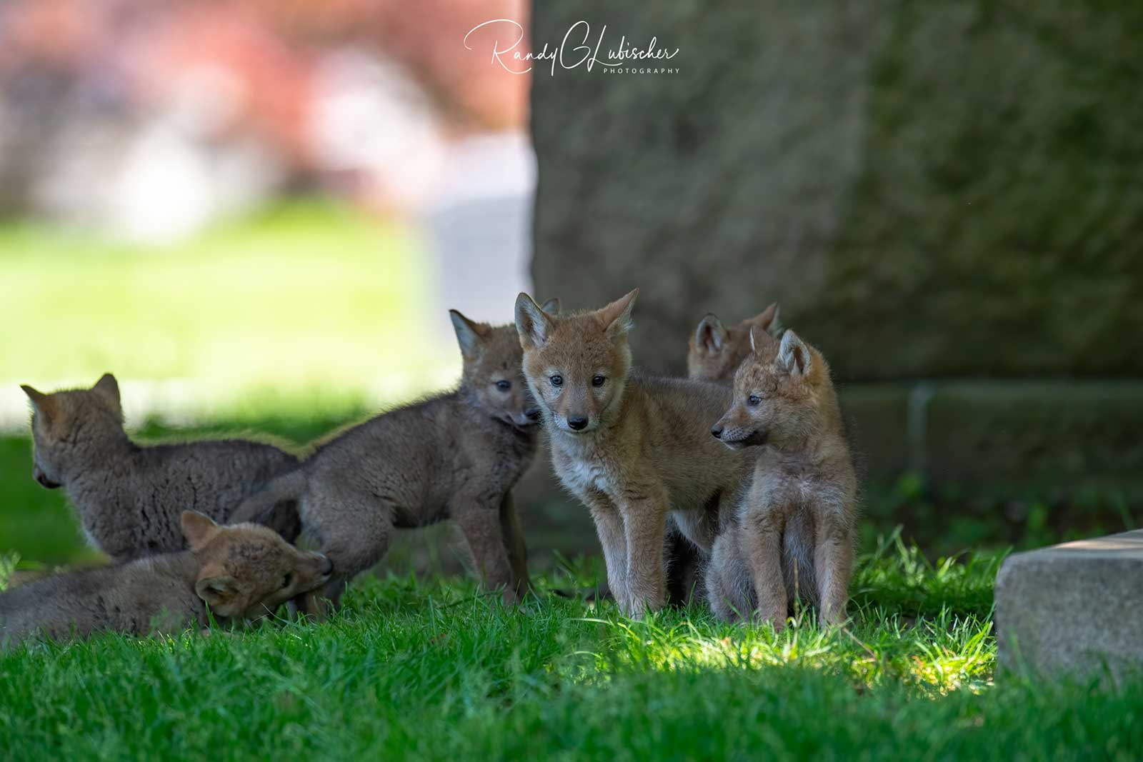 A Wild Mother's Little Ones